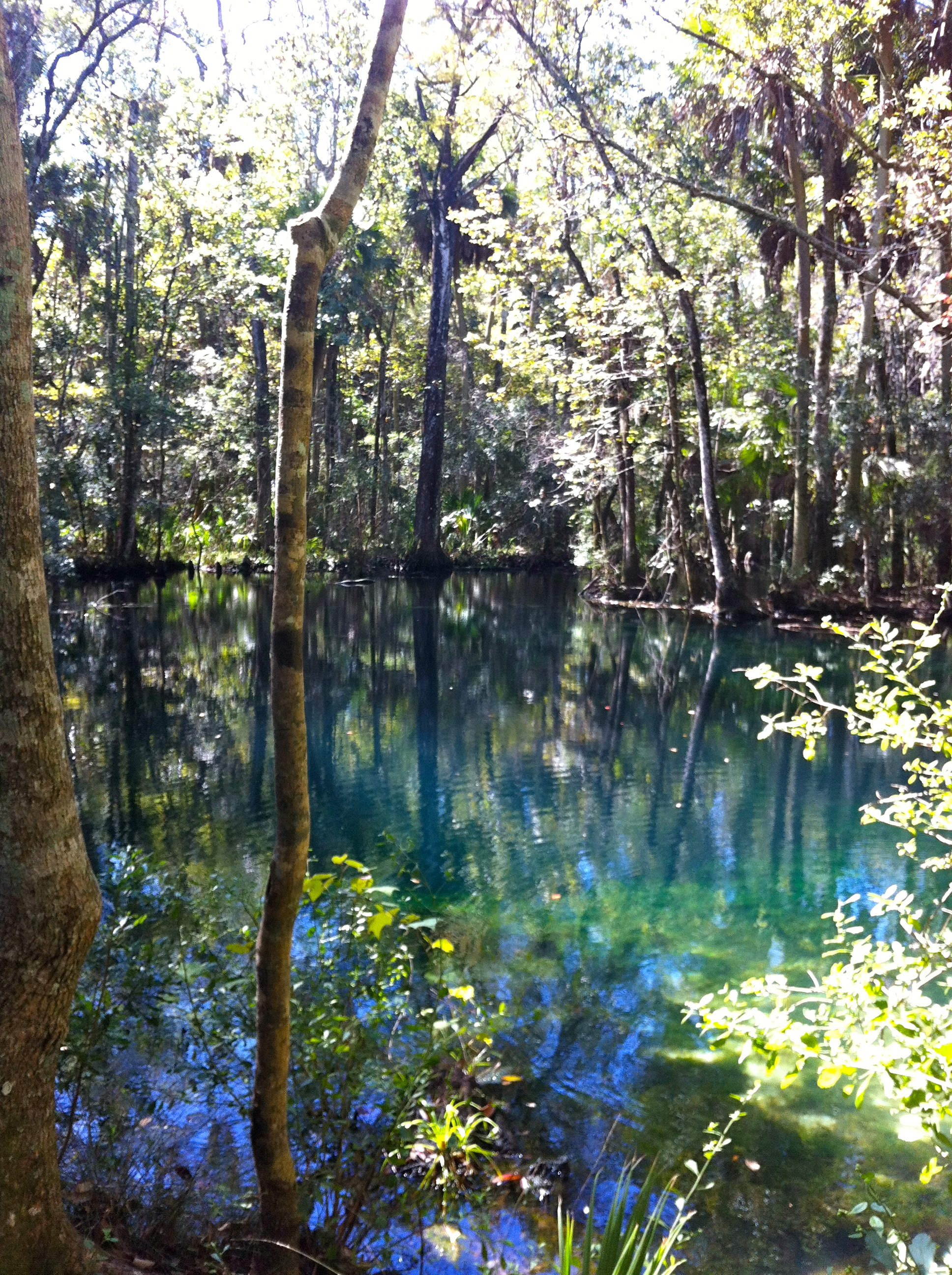 Floridan Aquifer can only handle 6% more pumping before serious environmental harm